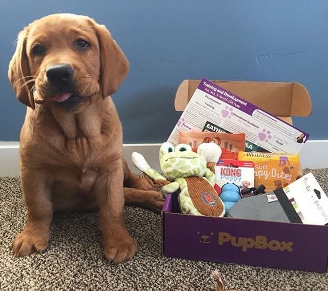 pupbox Subscription