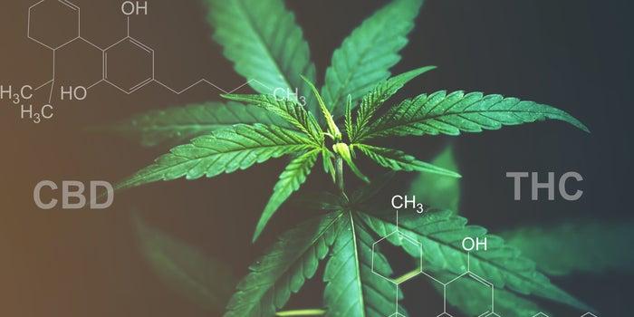 CBD And THC