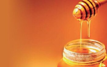 Tips to Select the Efficient Beehive Service for Receiving Ultimate Benefits