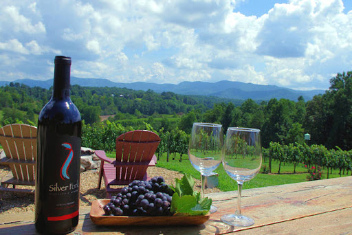 Things to look forward to planning for wine tours in wineries